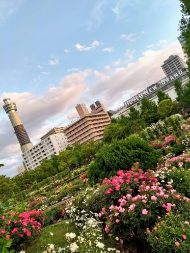 Article 121-photo 9-08 07 2020_Marine tower_Yamashita park_Yokohama